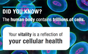 The key to vitality and wellness is a healthy body at the cellular level assisted by glutathione